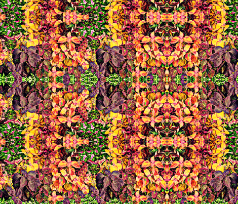 Glorious Coleus fabric by robin_rice on Spoonflower - custom fabric
