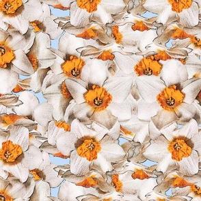 Daffodil Skies Forever
