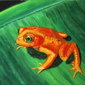 Golden Frog of Panama