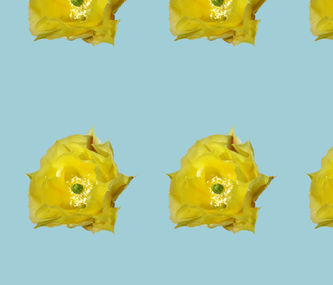 prickly pear bloom fabric by harry on Spoonflower - custom fabric