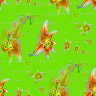 green_lillies