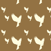 brown_with_white_swooping_birds