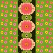 Rzinnias_and_mirrored_zinnia_black_border_picnik_collage_shop_thumb