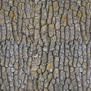 Garry Oak bark