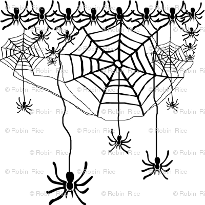 Spiders Galore!