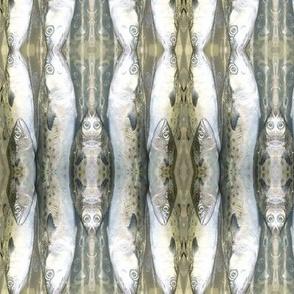 silverfishpix