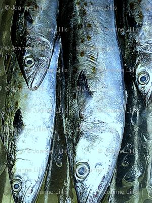 silverfishpix-ed-ed