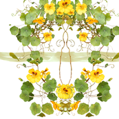 Yellow_Nasturtium_chair_back