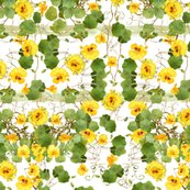 Rnasturtium-chair_cover_shop_thumb
