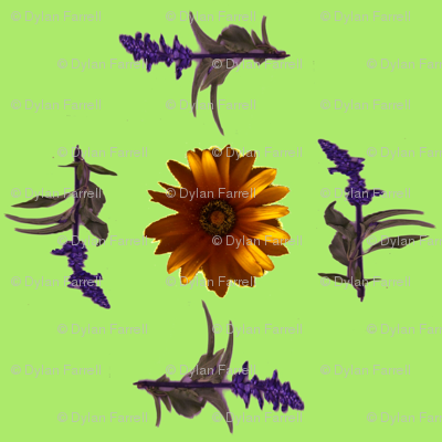 sunflower_and_friendsjpg