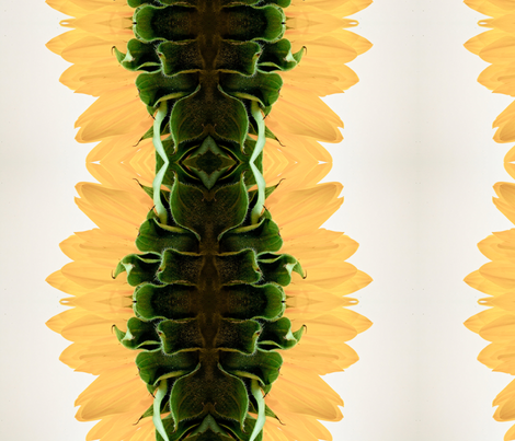 sunflower stripes fabric by emmaleeerose on Spoonflower - custom fabric