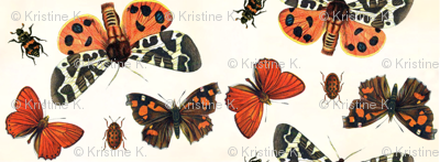 Boo-tiful Butterflies