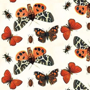 Boo-tiful Butterflies