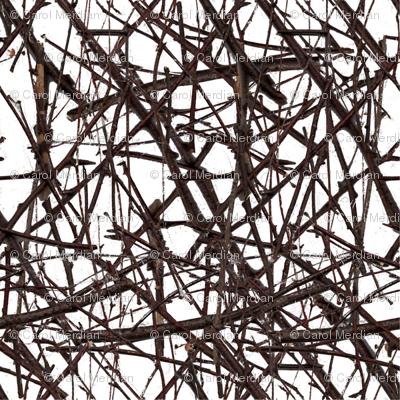 sticks & twigs