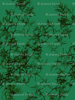green_asparagus