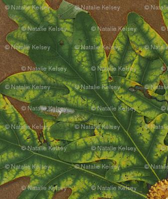 Autumn Scanleaves