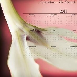 Acidanthera Calendar