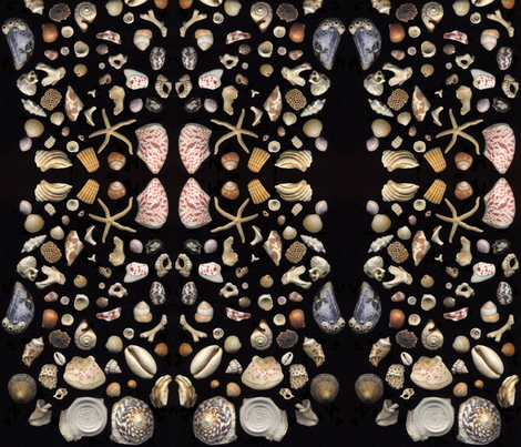 Bermuda Seashells fabric by sarahthomas on Spoonflower - custom fabric