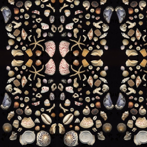 Bermuda Seashells