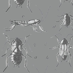 Beetlelicious