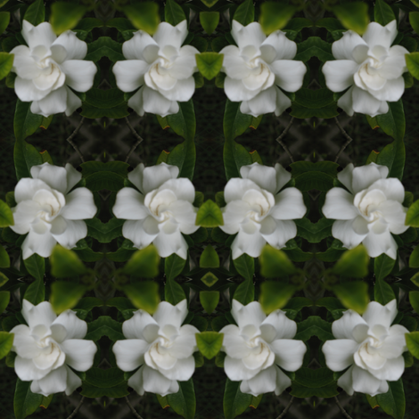 IMG_3278 - California Gardenia fabric by mmc2010 on Spoonflower - custom fabric
