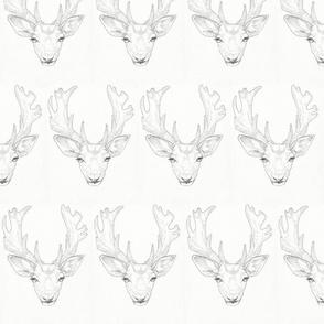fallow_deer
