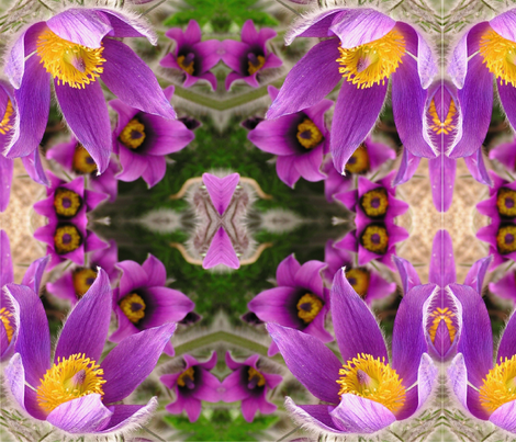 "Purple Pasque Flower 18"" Squares fabric by christa's_daughter on Spoonflower - custom fabric"