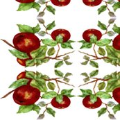 Apples_ed_shop_thumb