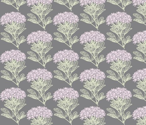Rchoisya-ternata_-_soft_pink_n_green_on_gray_shop_preview