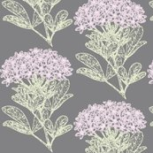 Rchoisya-ternata_-_soft_pink_n_green_on_gray_shop_thumb