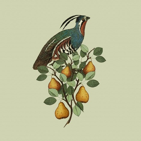 Rrpartridge_in_a_pear_tree_--_close_up_shop_preview