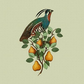 Partridge in a Pear Tree (large)