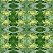 Fuzzy_flowerimg_3950_shop_thumb