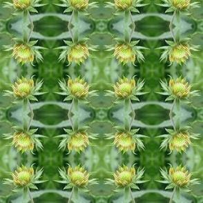 Fuzzy flower_3950