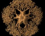 Rhaeckel_ophiodea_70_gorgonocephalid-2_thumb
