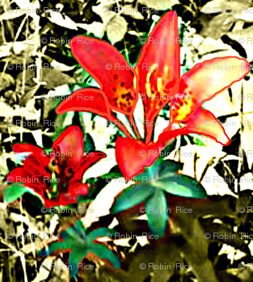 Sea Cairn Lily