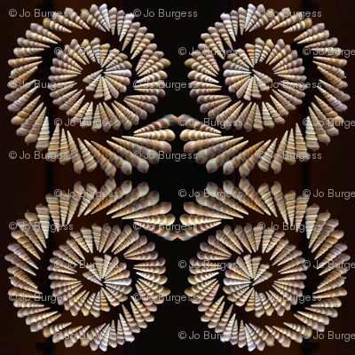 spiral shells saturated