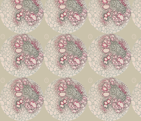 corn cross-section fabric by snuffbox on Spoonflower - custom fabric