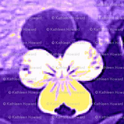 purple and yellow_johnie-jump-ups_6_28_09_006-ch-ch