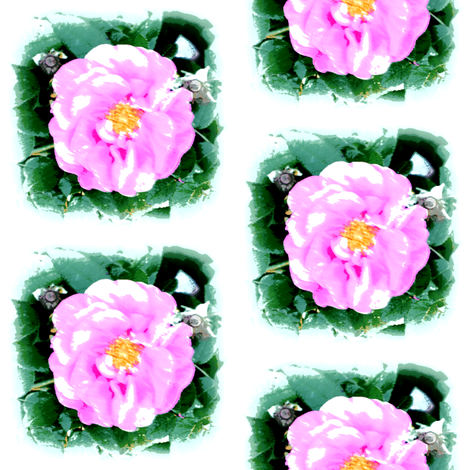 wild_rose_boost_011 fabric by khowardquilts on Spoonflower - custom fabric