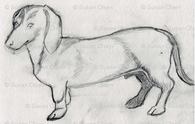dachsisketch