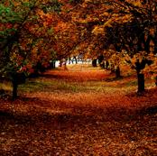 Fall tree ally!
