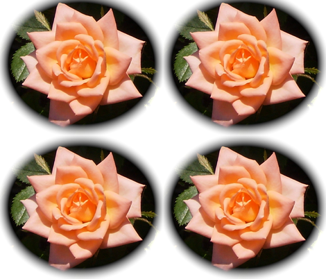 Peach rose fabric by murrday on Spoonflower - custom fabric
