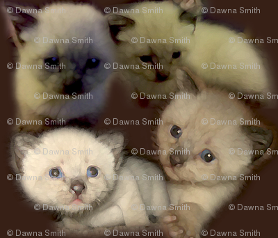Fuzzy Kittens on Brown