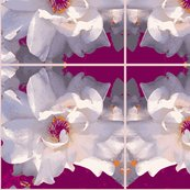 Rose_white_pattern_shop_thumb
