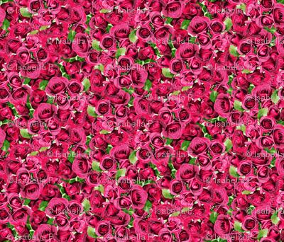 Abundant Roses - Pink