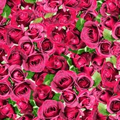 Rrabundant_roses_-_pink_11-10-13_shop_thumb