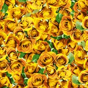 Rrabundant_roses_-_yellow_11-10-13_shop_thumb