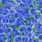 Rrabundant_roses_-_blue_11-10-13_shop_thumb