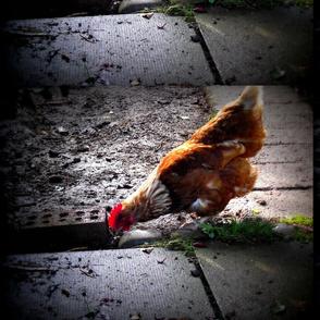 Chick chick chick chick chicken !